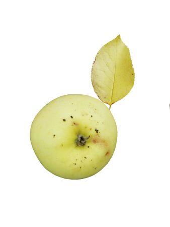 pomme jaune: pomme jaune avec feuille jaune