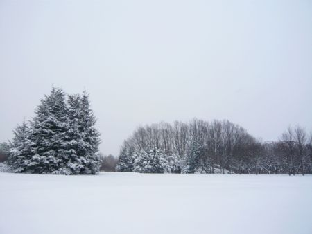 winter forest with pine trees covered by snow Stock Photo - 6110002