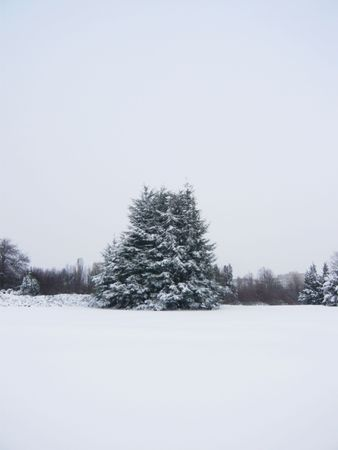 winter forest with pine trees covered by snow Stock Photo - 6109997