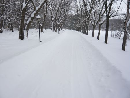 road in the winter forest photo