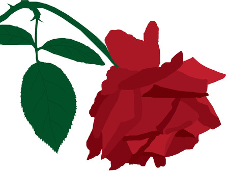 red rose with green leaves Vector