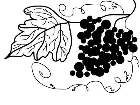 grape illustration in black and white Vector