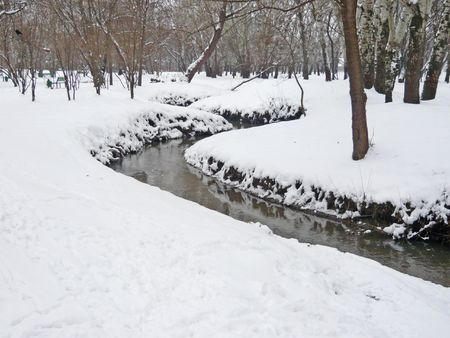 winter forest with little river photo