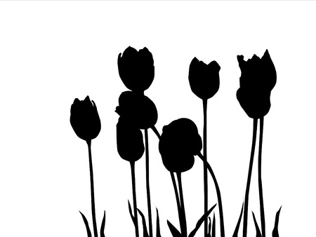 balck: black tulipes on white background