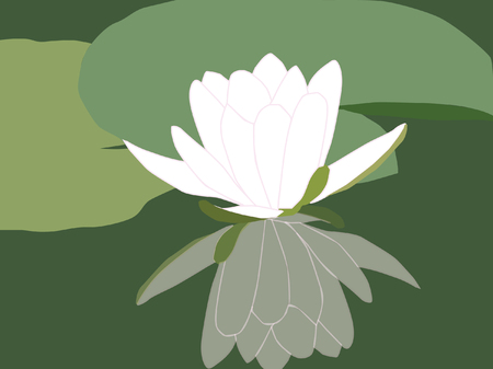 nenuphar: white water lily, vector illustration