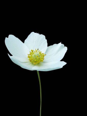 white flower isolate on white Stock Photo - 6674900