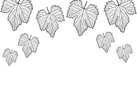 grape leaves: grape leaves