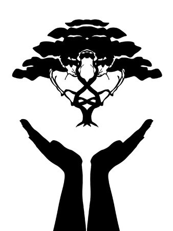 bonsai: human hands care tree