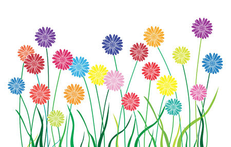 aster: aster multicolor garden with fresh grass Illustration
