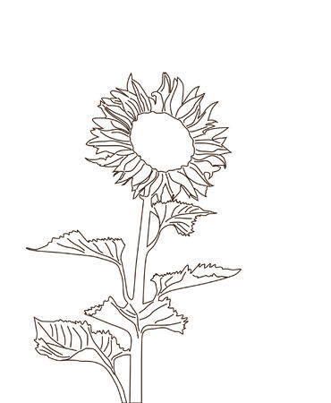 sunflower silhouette, element for your design