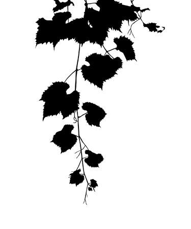 grape leaves: grape leaves silhouette, design element