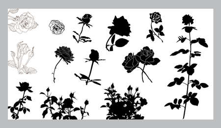 set of 13 rose silhouettes, elements for your design Stock Vector - 8614463