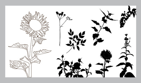 set of 8 flower silhouettes, elements for your design Stock Vector - 8614457