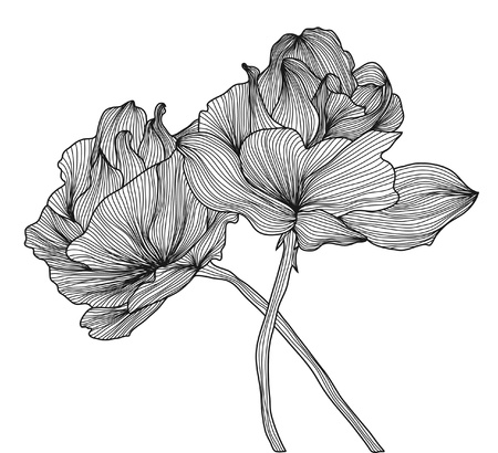 hand drawn decorative roses for your design Stock Illustratie