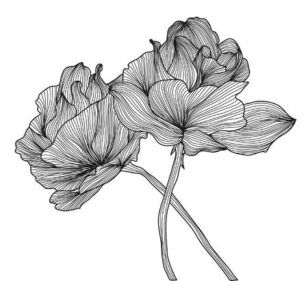 kézzel rajzolt díszítő rózsák a design Illusztráció