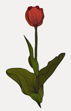 hand drawn decorative tulip flower for your design Vector