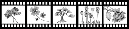 film strip with beautiful decorative floral elements for your design