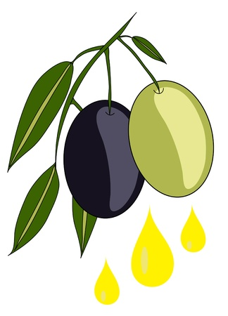 olive illustration: olive branch with oil drops, healthy lifestyle