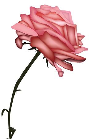 Elegáns rózsaszín rózsa, szerelem jelképe, a design