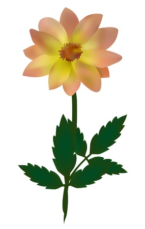dignity: elegant dahlia flower, symbol of dignity and elegance, for your design