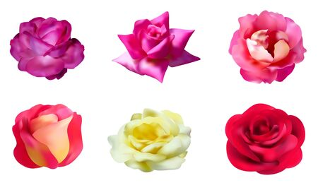 passion flower: set of 6 rose flowers for your design