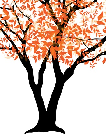 autumn trees: elegant autumn tree, symbol of nature