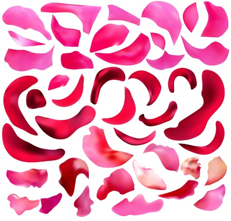 abstract pink and red rose petals background Illustration