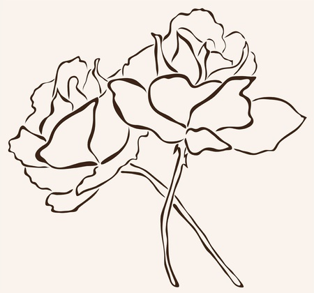 rosaceae: hand drawn rose flowers for your design Illustration