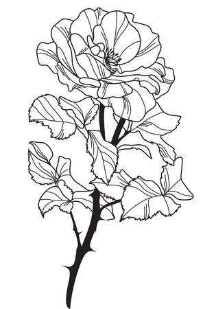 hand drawn decorative rose, design element Stock Vector - 21220076