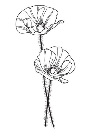 hand drawn decorative poppy flowers, design element Vector