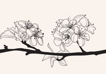 hand drawn decorative cherry blossom, design element Vector