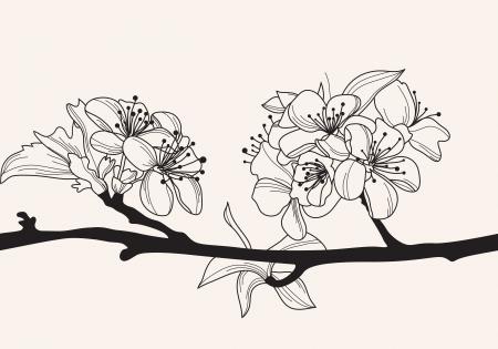cerisier fleur: tir� par la main de fleur, �l�ment de design d�coratif cerise Illustration