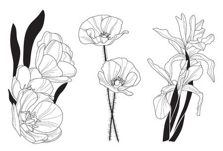 amapola: dibujado a mano tulipán decorativo, amapola y el iris flores, elemento de diseño