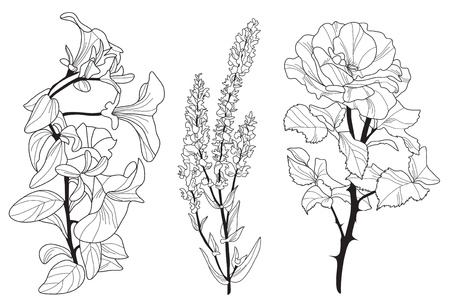 hand drawn decorative flowers, design elements Illustration