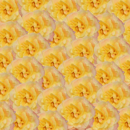 floral background with beautiful yellow roses photo