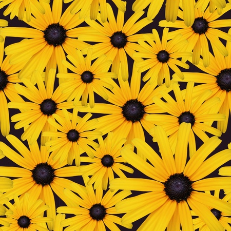 beautiful gaillardia flowers background, seamless pattern photo