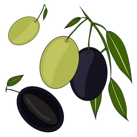 olive branch, with whole and sliced olives, healthy vegetarian food Vector