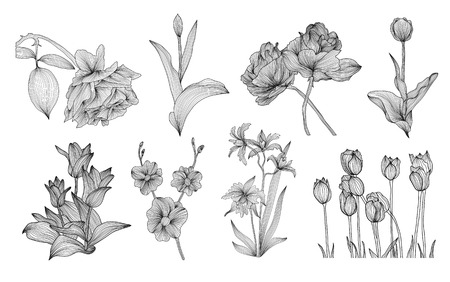 set of hand drawn decorative flowers: roses, tulips, orchids, design elements