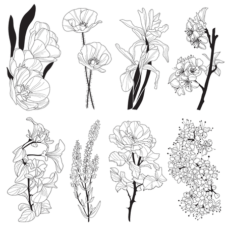 set of hand drawn decorative flowers: tulip, iris, poppy, cherry, viola, rose, design elements Vector