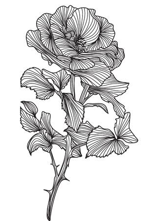 hand drawn decorative rose, design element Vector