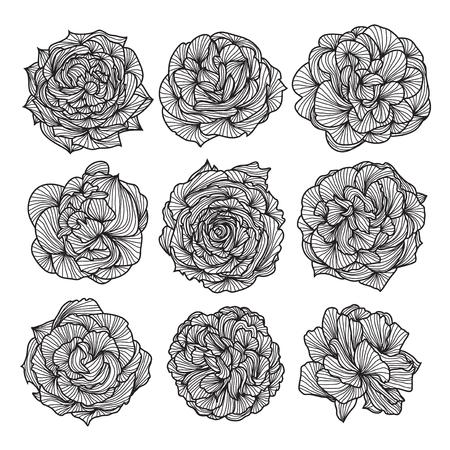 Ensemble de 9 dessinés à la main des roses décoratifs, des éléments de conception Banque d'images - 24592196