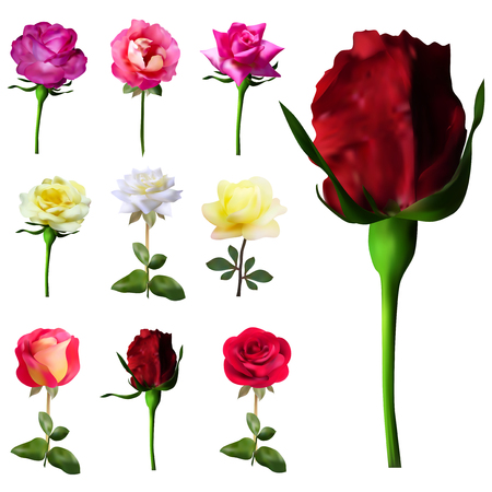 set of 9 decorative pink, red, white and yellow roses, design elements Illustration