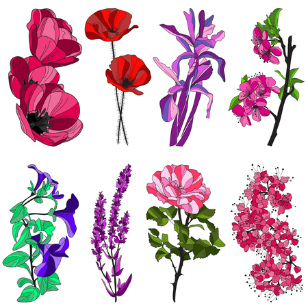 set of hand drawn decorative flowers: tulip, poppy, iris, cherry, viola, violet and rose, design elements Vector