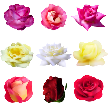 set of 9 decorative pink, yellow, white and red roses, design elements Vector