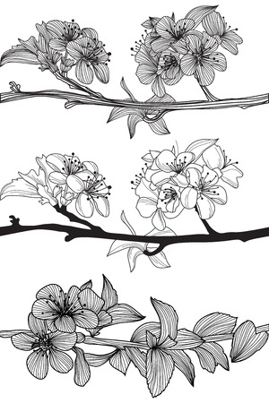 set of hand drawn decorative cherry blossoms, design elements Vector