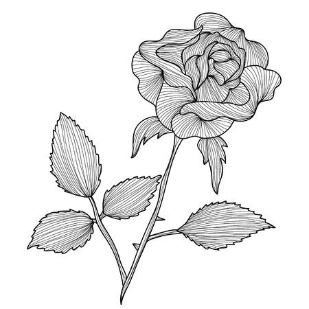 Elegant decorative rose flowers, design elements. Floral branch. Floral decoration for vintage wedding invitations, greeting cards, banners. Symbol of love. Vector