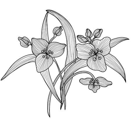 Elegant decorative lily flowers, design element. Floral branch. Floral decoration for vintage wedding invitations, greeting cards, banners. Illustration