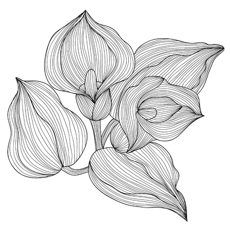 Elegant decorative calla flowers, design element. Floral branch. Floral decoration for vintage wedding invitations, greeting cards, banners.