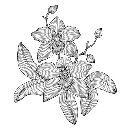 Elegant decorative orchid flowers, design element. Floral branch. Floral decoration for vintage wedding invitations, greeting cards, banners. Vector