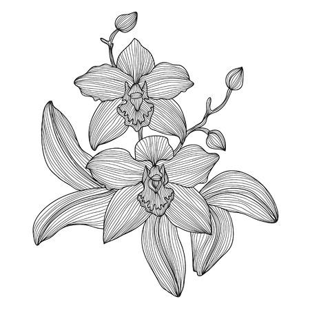 Elegante decoratieve orchidee bloemen, design element. Bloemen tak. Bloemendecoratie voor vintage bruiloft uitnodigingen, wenskaarten, banners.
